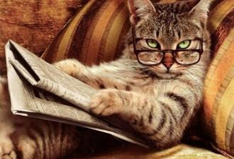 Кошачья расплата представляет… — «Ты это… Мурзик, извини… Я тебя больше не обижу»