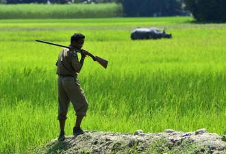 В индийском парке ради спасения носорогов убивают людей (5 фото)