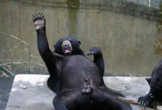 Когда поход в зоопарк выдался не таким, как ты его представлял (9 фото)