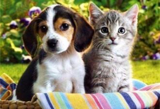 А говорят, животные ничего не понимают!