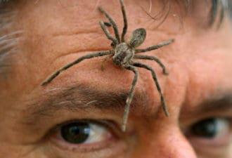 Топ-10 самых ядовитых и опасных пауков в мире