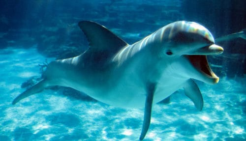 Рисунок 9. Дельфин под водой