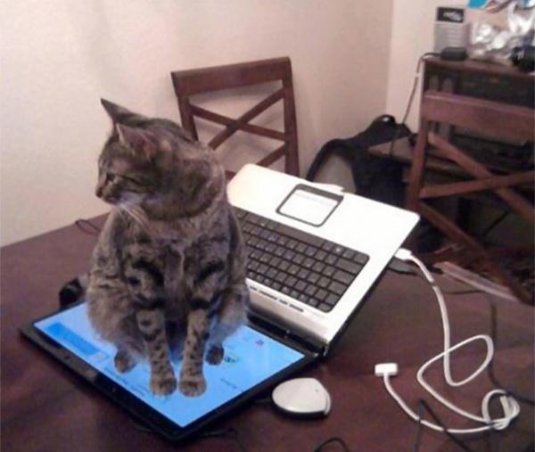 12120060-r3l8t8d-600-cat-logic-funny-10__605
