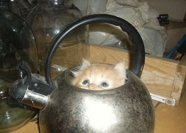 7946710-r3l8t8d-650-funny-cats-if-it-fits-i-sits-17
