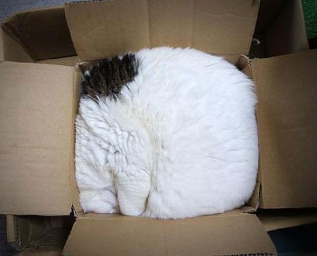 7946760-r3l8t8d-650-funny-cats-if-it-fits-i-sits-6
