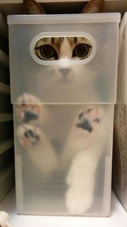 7947460-r3l8t8d-650-funny-cats-if-it-fits-i-sits-3