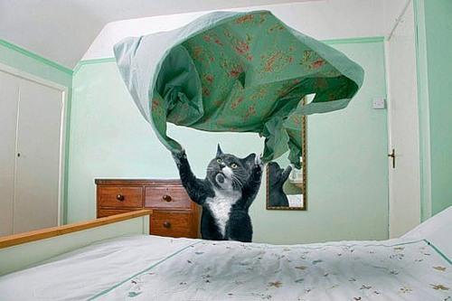 dream_cat_creativing-net_002