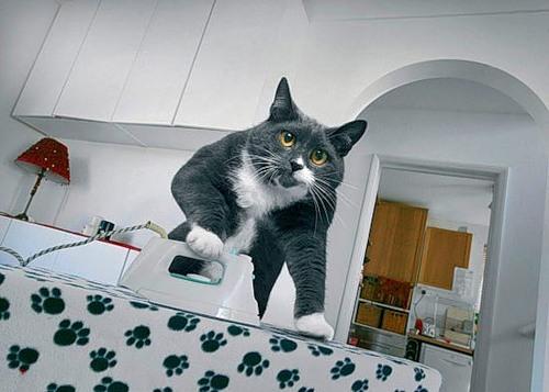 dream_cat_creativing-net_003