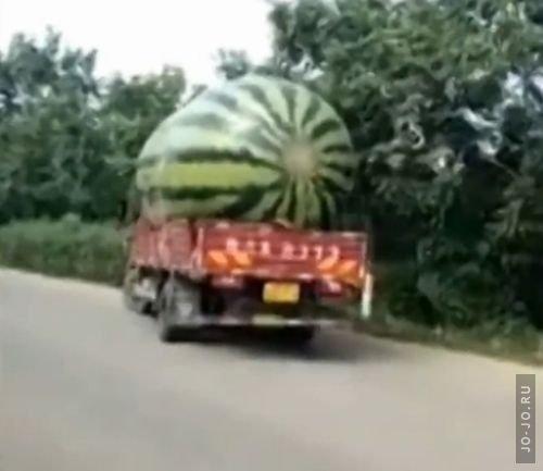 1472497012_29082016-watermelon1
