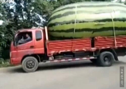 1472497052_29082016-watermelon