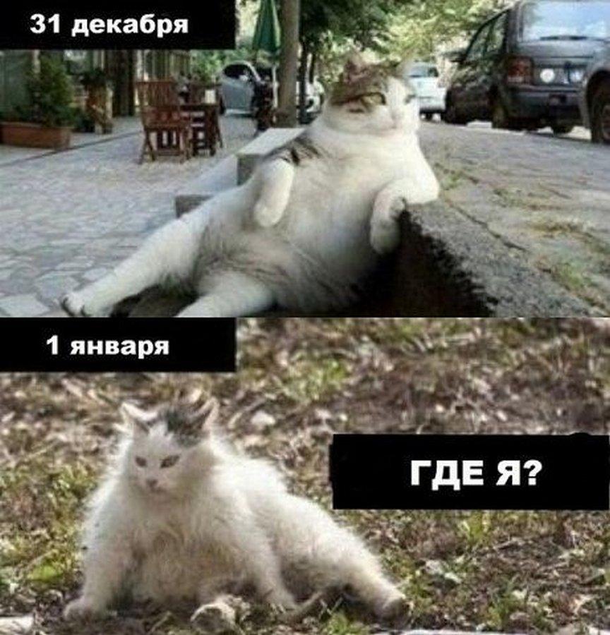 smeshnoe-iz-setej_532