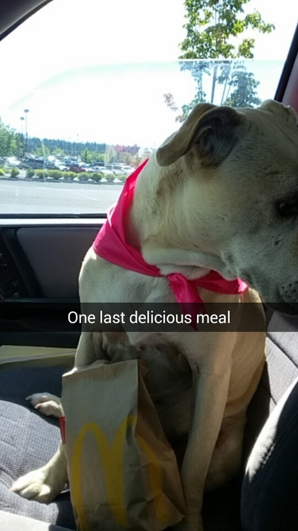 last-day-dying-dog-snapchat-hannah-a11