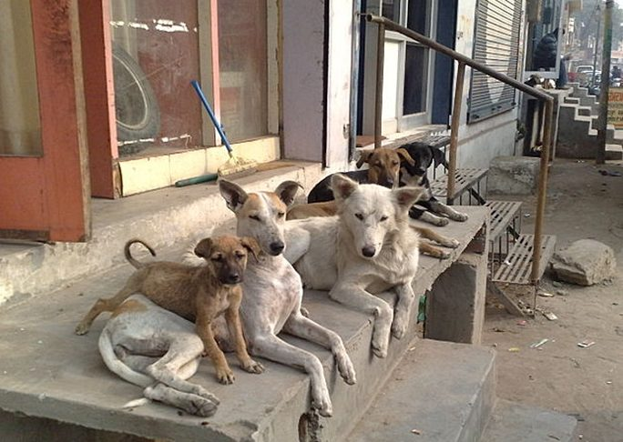 Бездомные-собаки