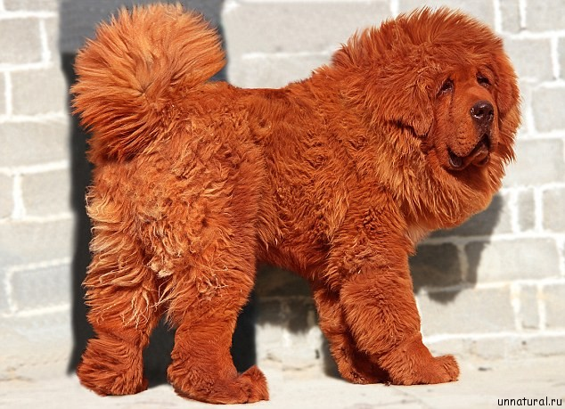 most_expensive_dog_1