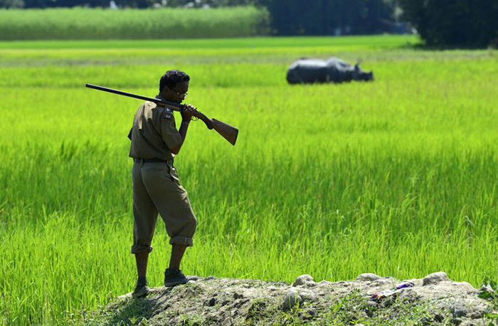 national-park-shoots-people-protects-rhinos-kaziranga-3