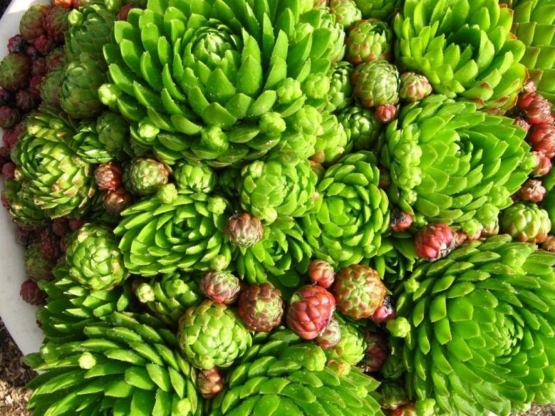 cvety-na-kladbishche-3