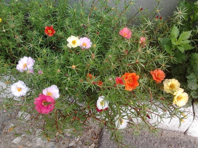 cvety-na-kladbishche-4