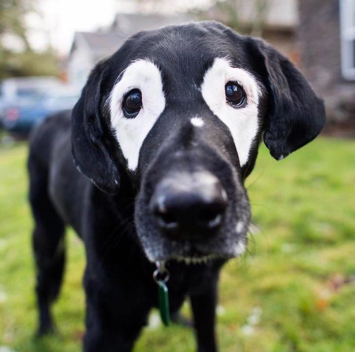 boy-dog-skin-disorder-vitiligo-carter-oregon-2-58d229f76e556__700
