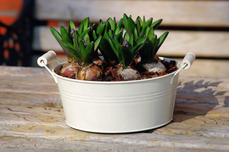 hyacinth-1286716_1280-730x486