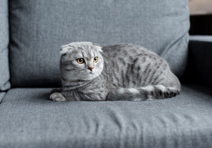cat2-730x510