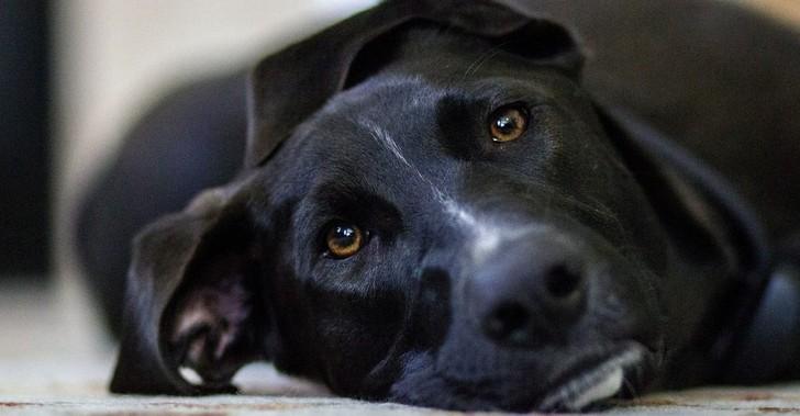 what-causes-dog-seizures_canna-pet-e1488307363172