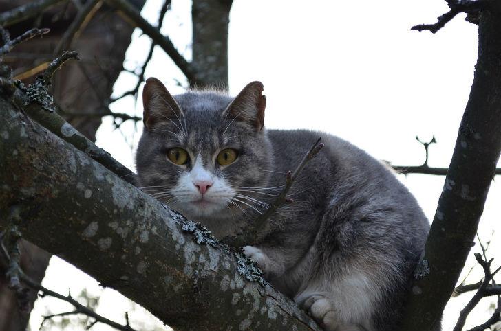 cat-1284390_1280