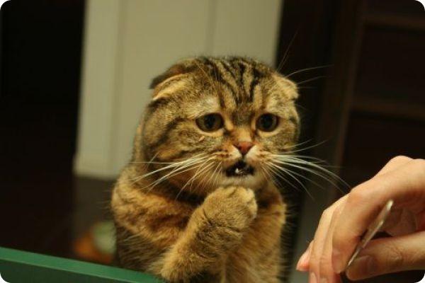 кошка-просит-валерьянку