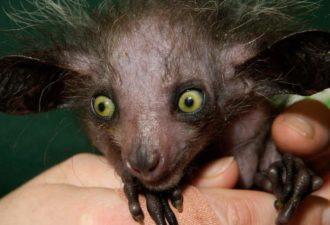 Топ-10 самых странных животных в мире