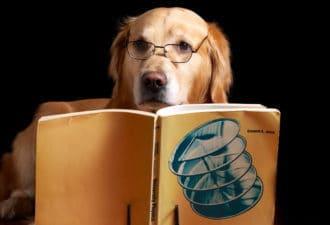 Топ-10 самых умных животных в мире