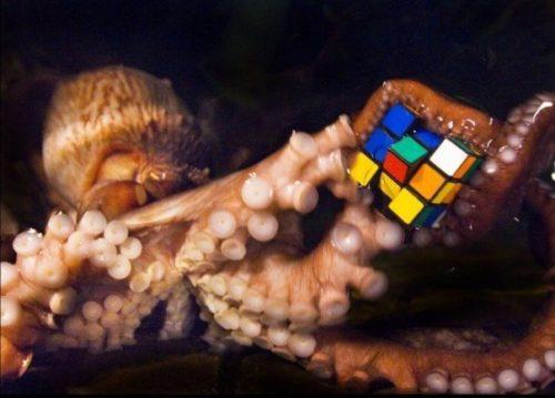 Рисунок 2. Умный осьминог