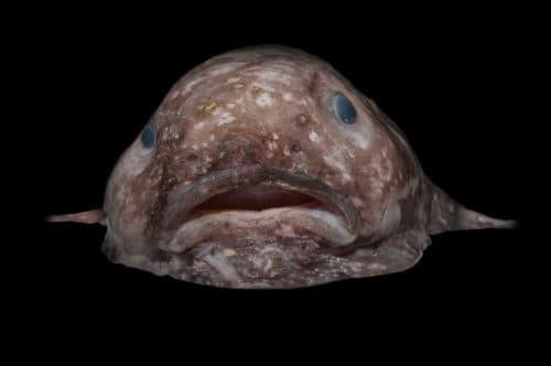 Рисунок 7. Рыба-капля