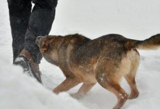Топ-5 самых опасных собак в мире