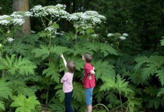 Топ-10 самых ядовитых и опасных растений на планете