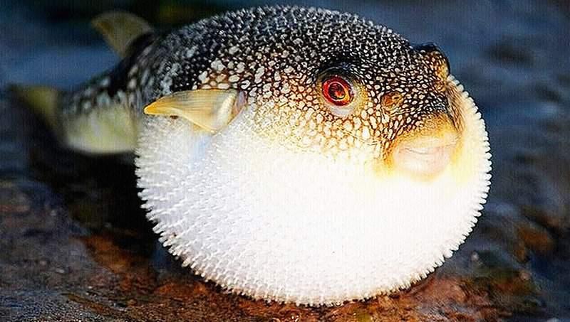Топ-10 самых ядовитых и смертельно опасных рыб в мире