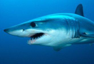 Топ-10 самых опасных акул-убийц на планете