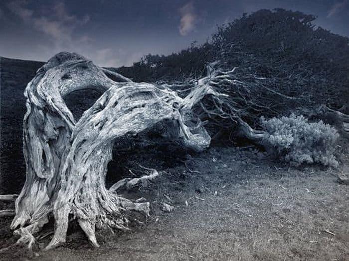 Растения, которые едят людей: правда и мифы о деревьях-людоедах