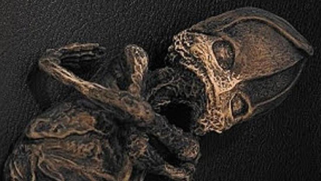 Тайна кыштымского карлика: кем на самом деле был гуманоид Алешенька?