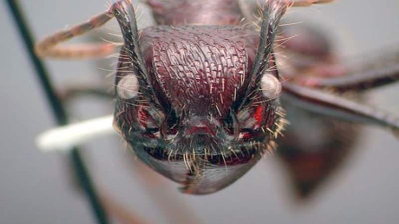 Топ-10 самых опасных и ядовитых насекомых в мире