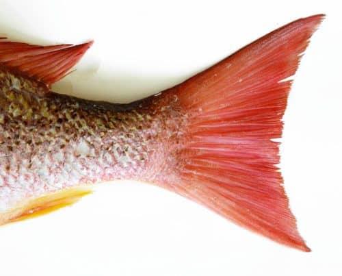 Рисунок 10. Прощальный взмах рыбьего хвоста.
