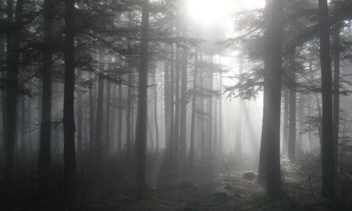 Рис. 2: Вермонтский лес