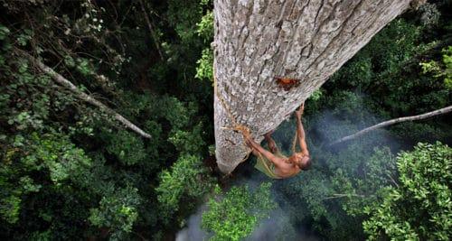 Рисунок 2. Многие племена поклоняются деревьям и делают им ритуальные подношения.