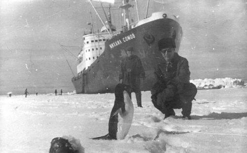 Рисунок 3. 133 дня общения с пингвинами под угрозой смерти
