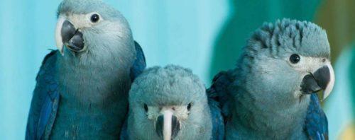 Рис. 8. Голубой ара