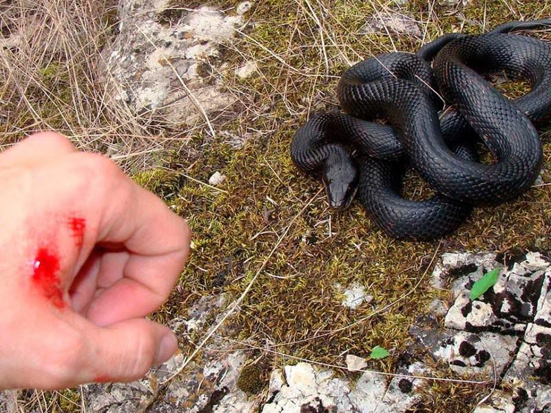 Топ-10 самых ядовитых и опасных змей в мире