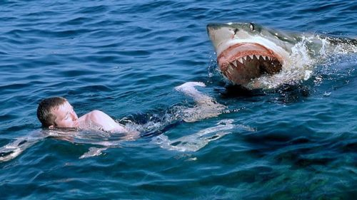 Рисунок 2. Что делать в такой ситуации – неизвестно. Действенных способов отпугивать акул ещё не изобретено.